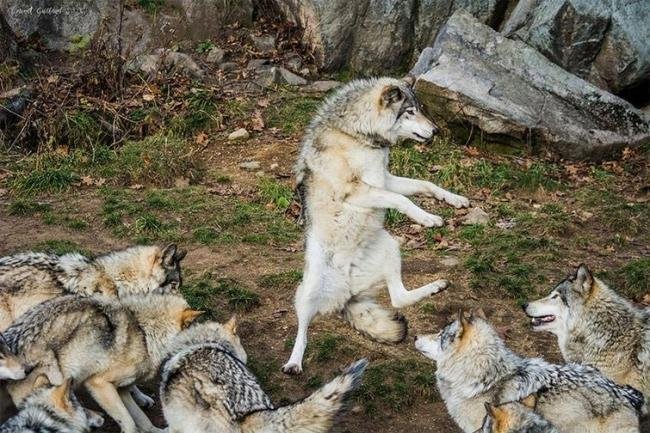 Подборка самых смешных снимков домашних животных за 2017 год (ФОТО)