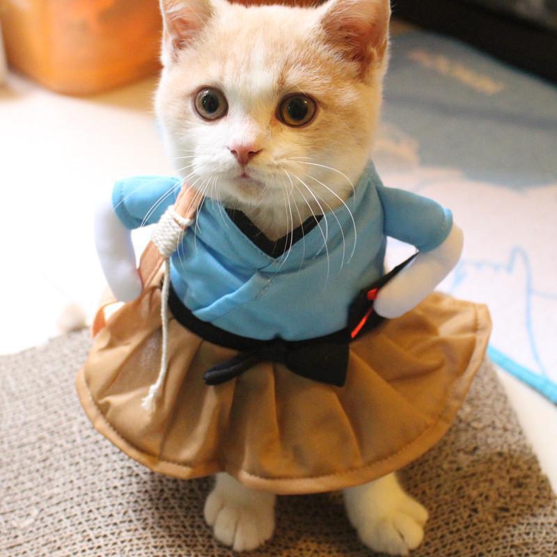 Одежда для животных кошек фото