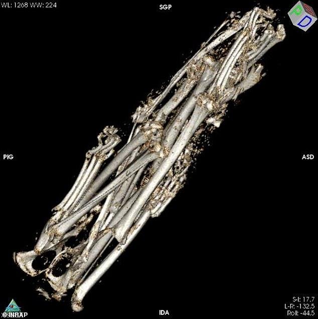 Три хвоста и пять лап: учёные просканировали древнеегипетскую мумию кота и обнаружили подлог. ФОТО
