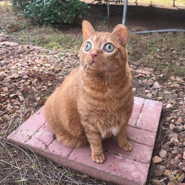 Потейто — кот, который стал звездой благодаря своим глазам