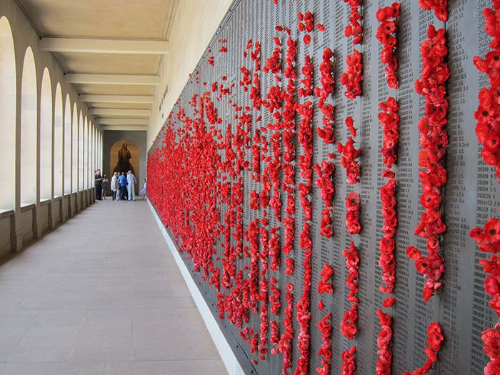 Голубь свил себе красочное гнездо из маков с военного мемориала