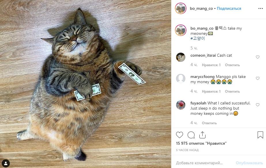 Пухлый пушистик: японский кот стал звездой сети из-за лишнего веса. ФОТО