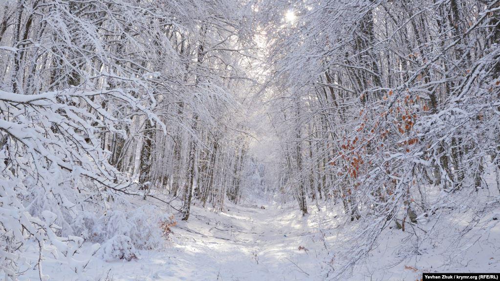 На плато Ай-Петри можно доехать по двум дорогам: со стороны Ялты или от села Соколиное, что в Бахчисарайском районе. Дорога от Соколиного более живописнее, но под силу только внедорожникам, да и те иногда застревают в снегу