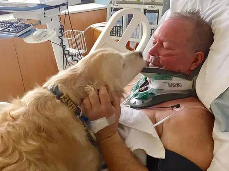 Собаки с чистыми сердцами, которые делают мир лучше. ФОТО