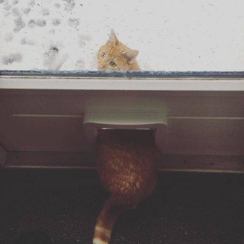 """Зима и коты — две несовместимые вещи: смешные """"доказательства"""""""