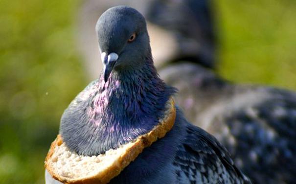 23 самых смешных промаха животных. ФОТО