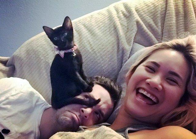 Уморительные кошки и коты, которые вас улыбнут
