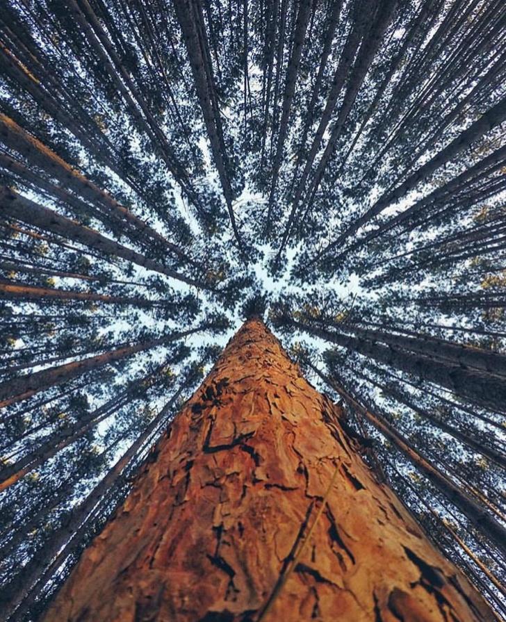 Самые необычные картины в мире фото нейл-дизайна предлагает