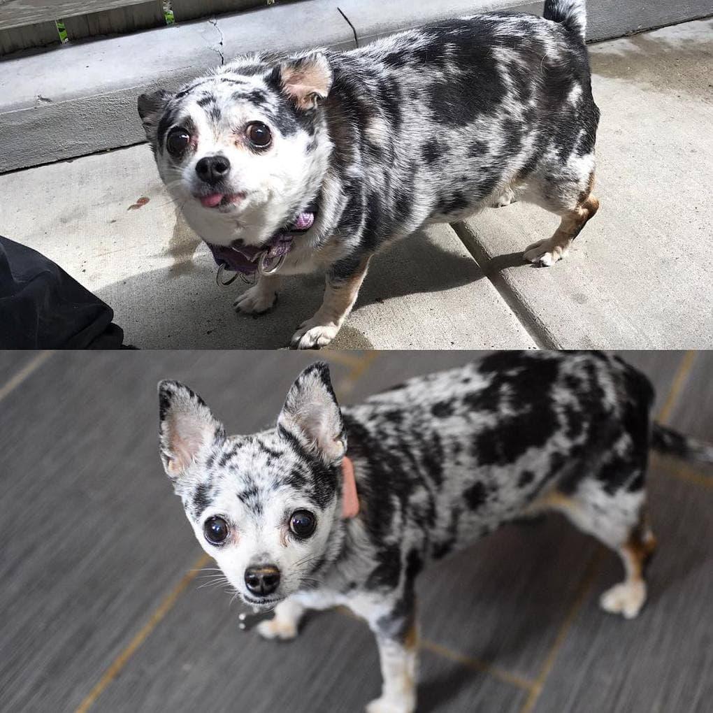 Сильно похудела старая собака