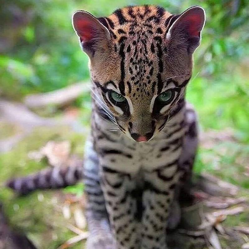 могут дикие милые животные фото есть