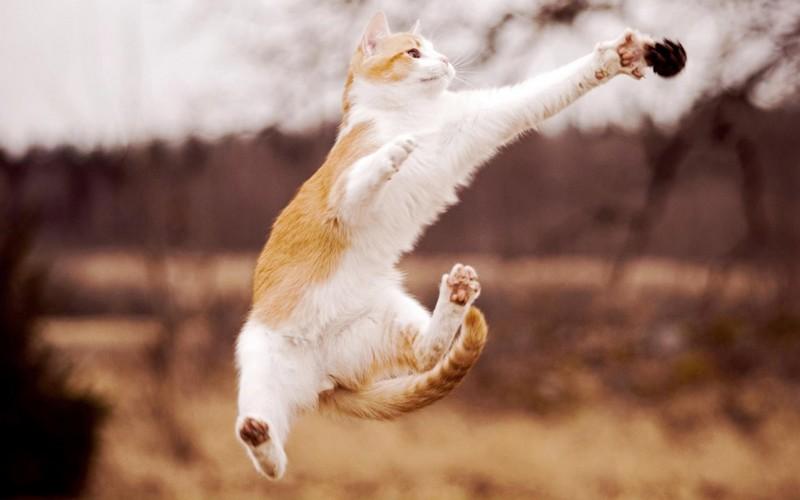 30 способов использования котов в хозяйстве. ФОТО