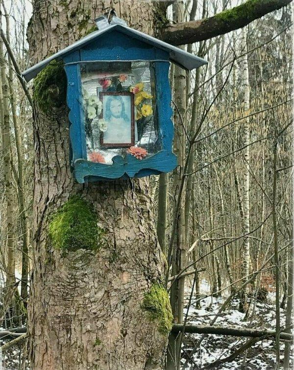Загадочные находки, которые люди случайно сделали в лесу
