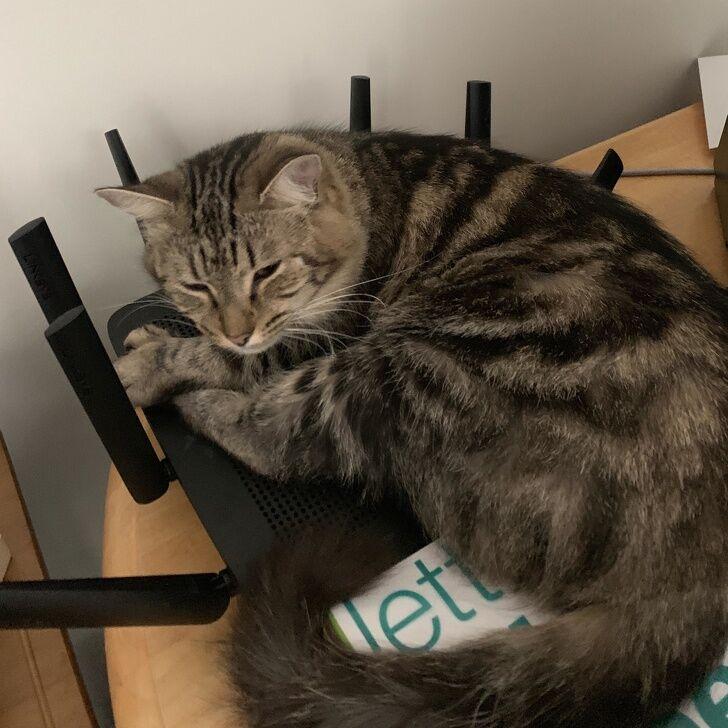 Коты на карантине повеселили сеть