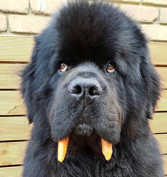 Моржовая собака — новая порода собак