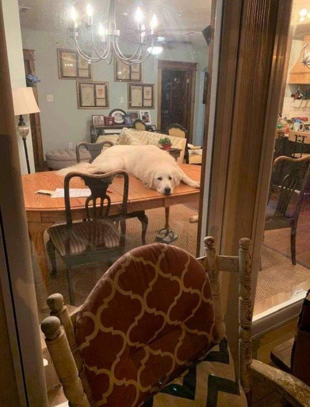 Иногда домашних животных лучше не оставлять без присмотра