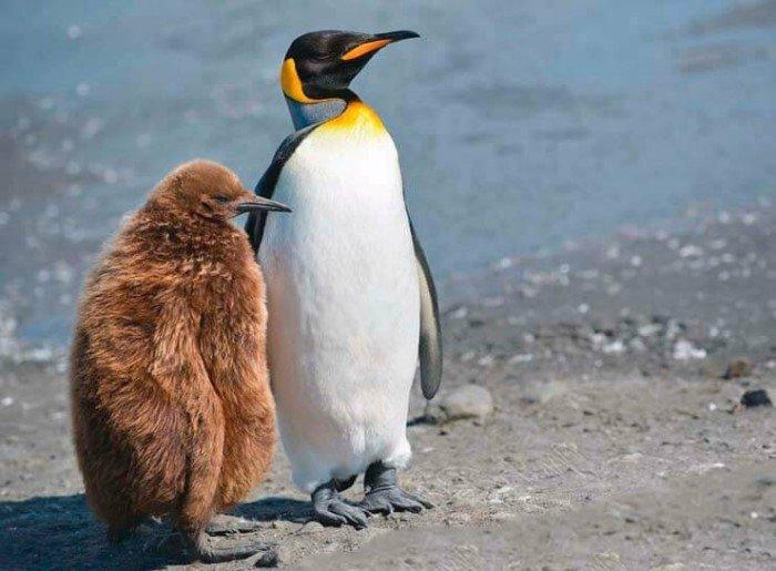 Милые и забавные детёныши разных животных