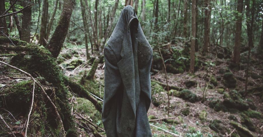 а лес зовет фото вот дружба, как