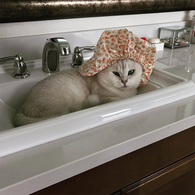 учётом фото кота в шапочке для душа фоторейтинг отведен для