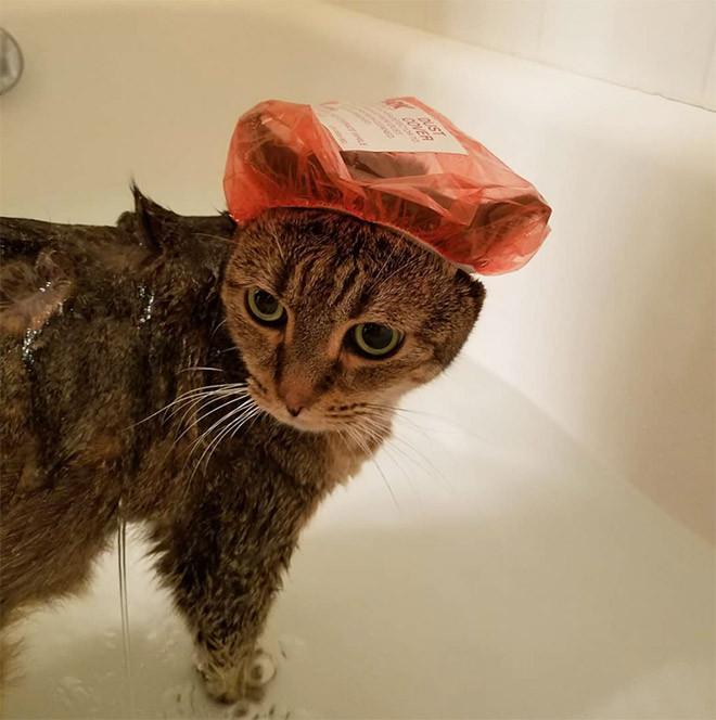 фото кота в шапочке для душа поэтому
