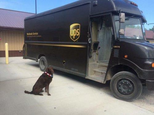 Прелестные собаки, встречающие работников курьерской службы (ФОТО)