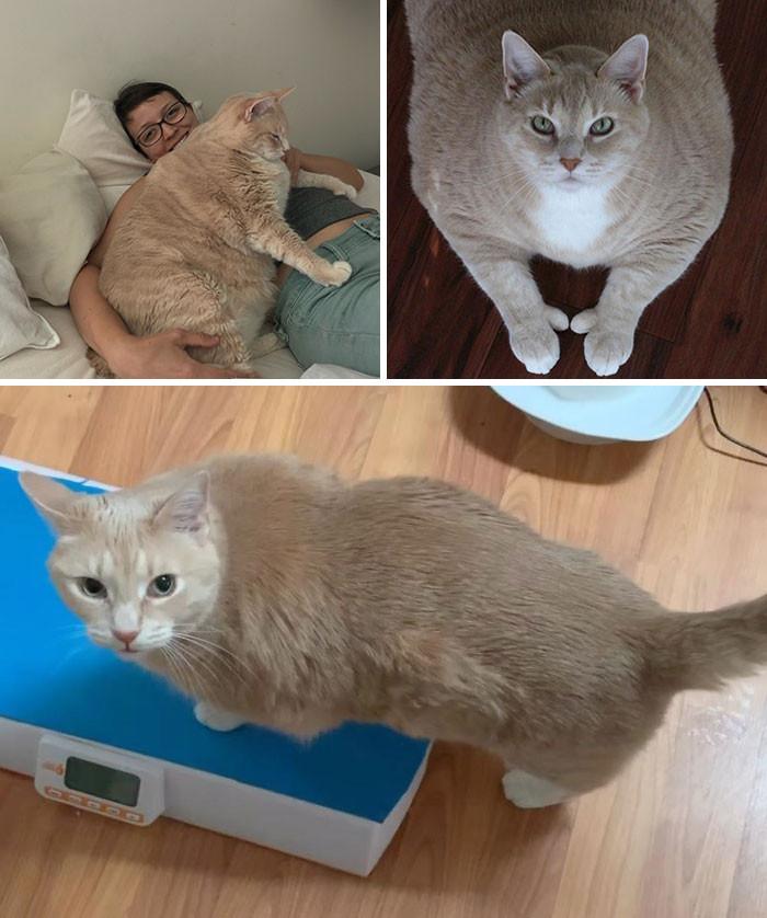 Если Похудела Кошка. Почему кошка похудела, что делать? Возможные причины похудения у кошек и сопутствующие симптомы