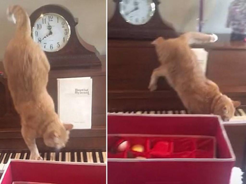Кот на пианино исполнил «кошачий вальс». ВИДЕО