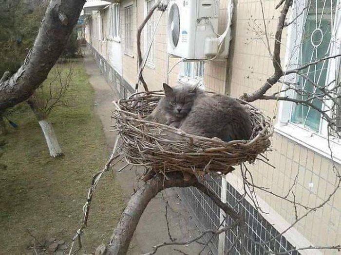 Этих котов поймали в самый смешной момент их жизни. ФОТО