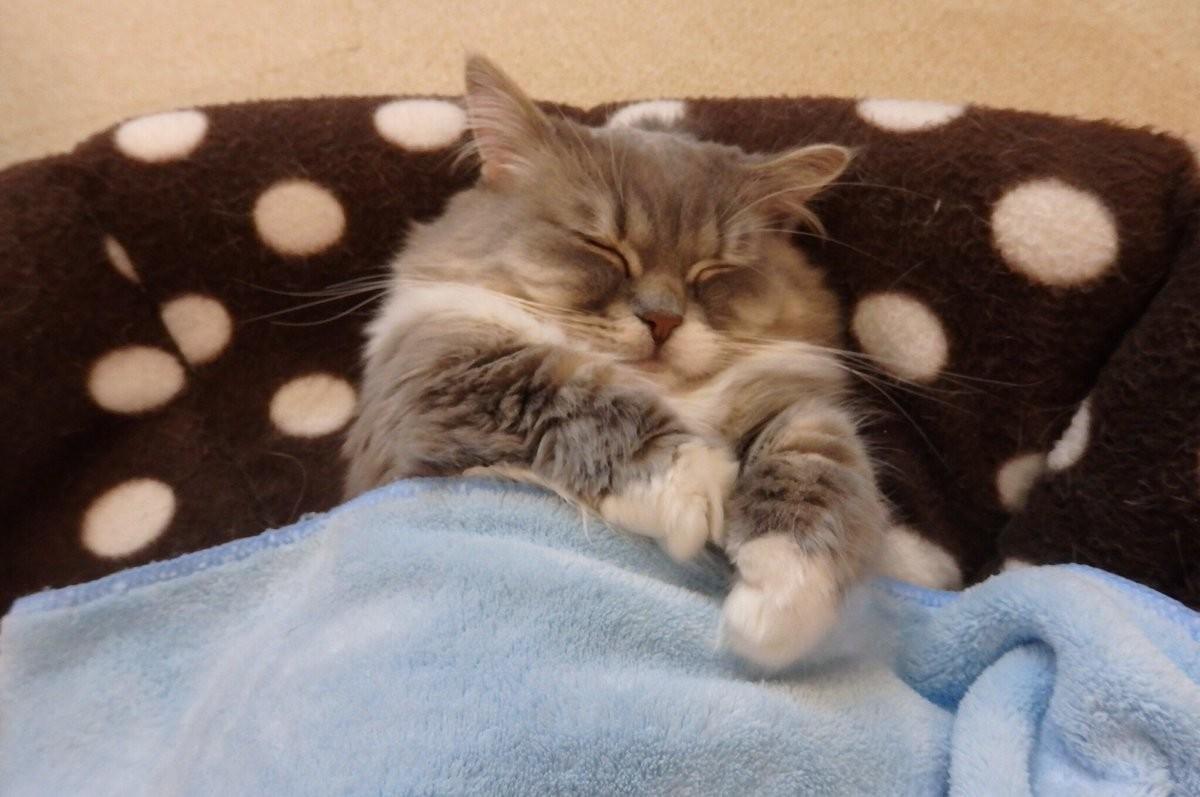 Кошка ложится спать фото