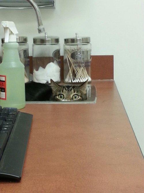 Курьезные снимки кошек, осознавших, что попали к ветеринару (ФОТО)