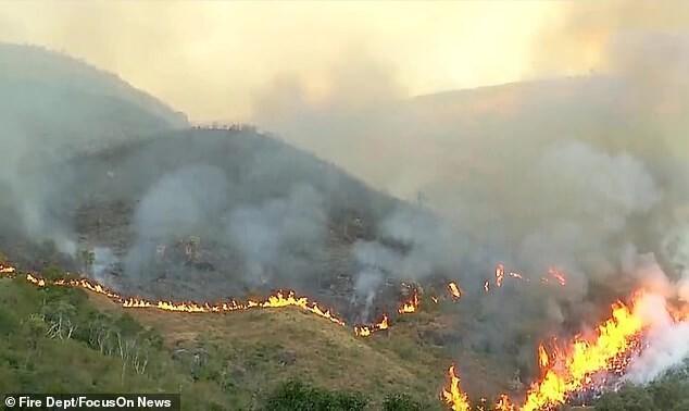 Бразильский пенсионер сжег 700 гектаров заповедного леса и погубил сотни животных из-за страховой аферы. ФОТО