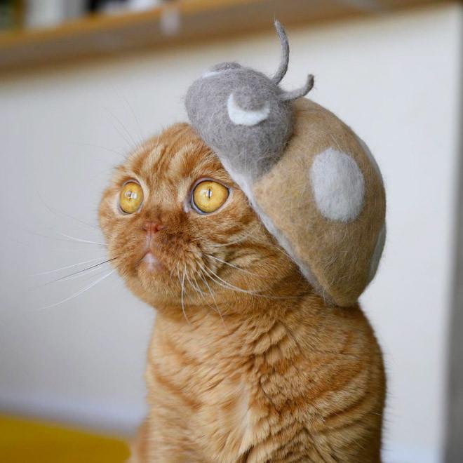 Милые котики в шапках из собственной шерсти