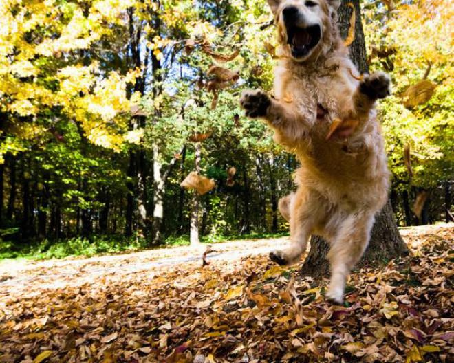 Весёлые собаки, которые обожают осеннюю листву