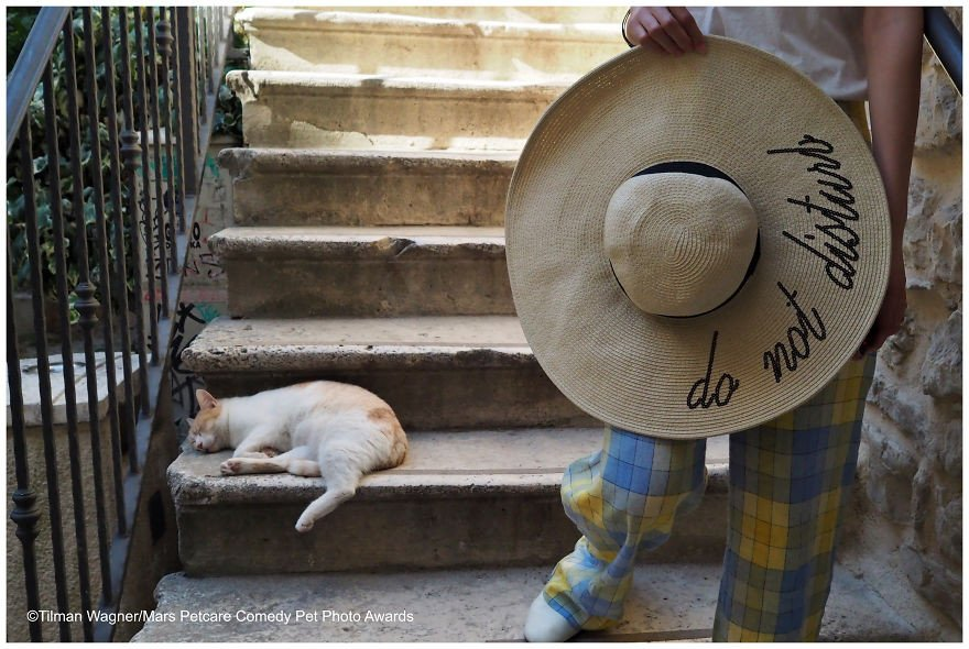 Самая смешная фотография с домашним животным: работы финалистов конкурса. ФОТО