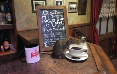 Кофе с грызунами: экстрим для американских туристов (ФОТО)
