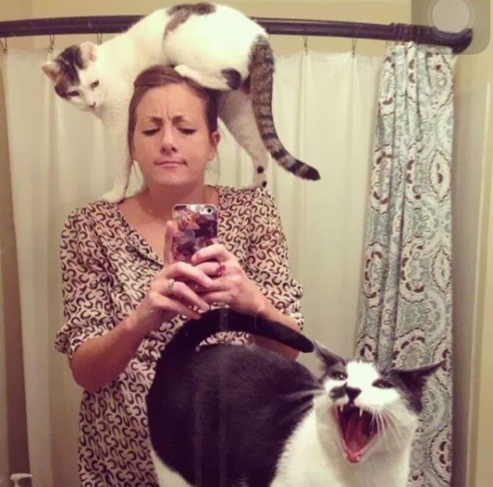 Иногда наглость котиков просто зашкаливает