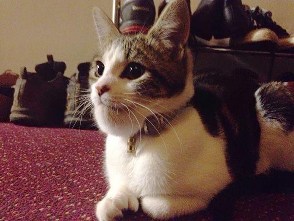 15 котов, проигравших битву с пчелами (ФОТО)