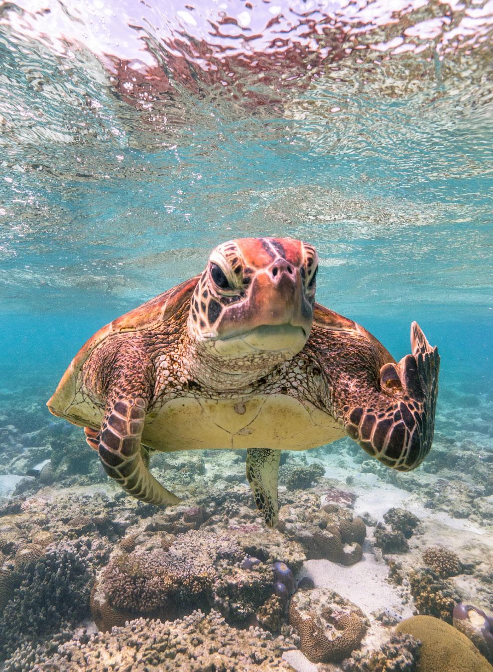 Победители фотоконкурса Comedy Wildlife Photography Awards 2020