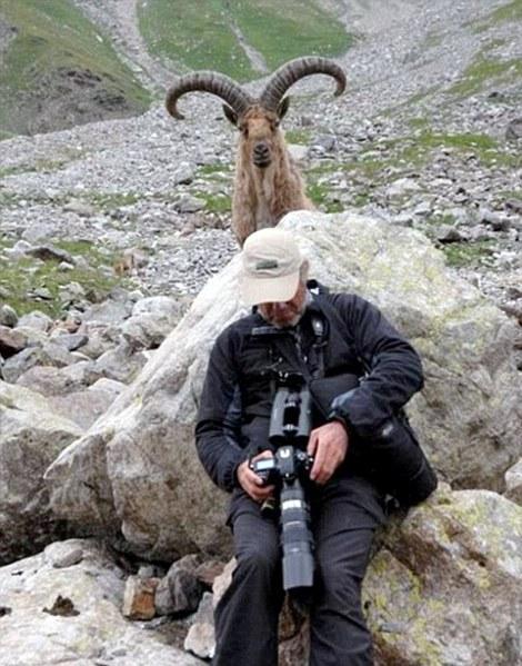 Животные мешают делать селфи. 10 курьезных снимков (ФОТО)
