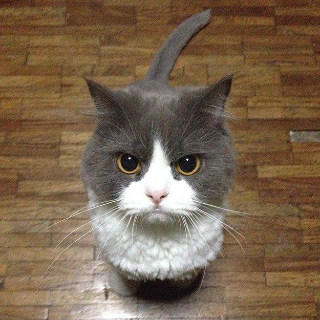cats-feel-12