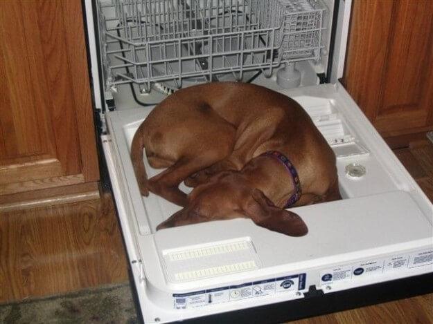 Фото забавных собак, способных уснуть в абсолютно разных местах. ФОТО