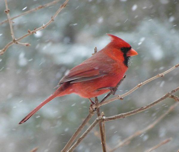 Зимний позитив: как животные радуются снегу. ФОТО
