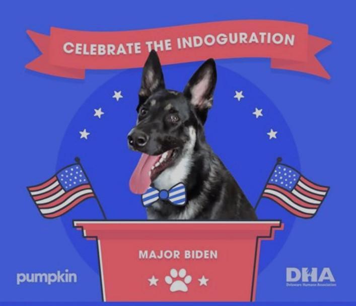 Для собаки Байдена проведут отдельную «инаугурацию». ФОТО