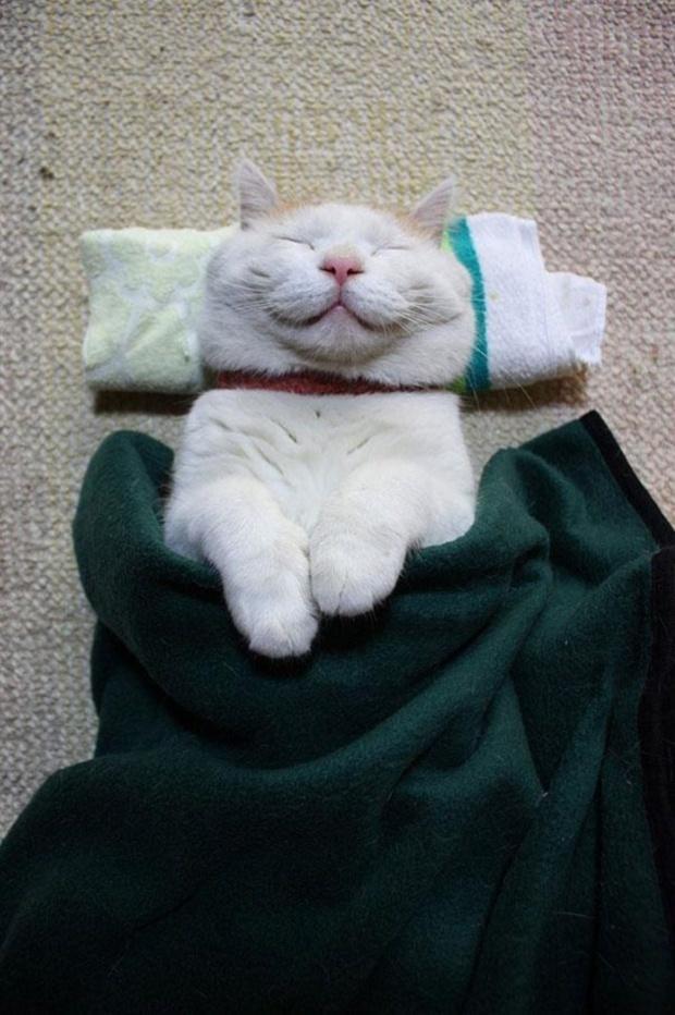 Самые известные коты интернета. ФОТО