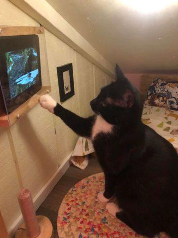 Парень построил персональную спальню для любимого кота. ФОТО