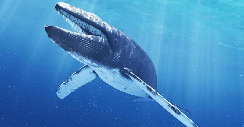 Самые крупные животные нашей планеты. ФОТО