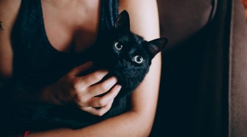Курьезы Сеть покорил кот, успокоивший плачущую хозяйку. ВИДЕО