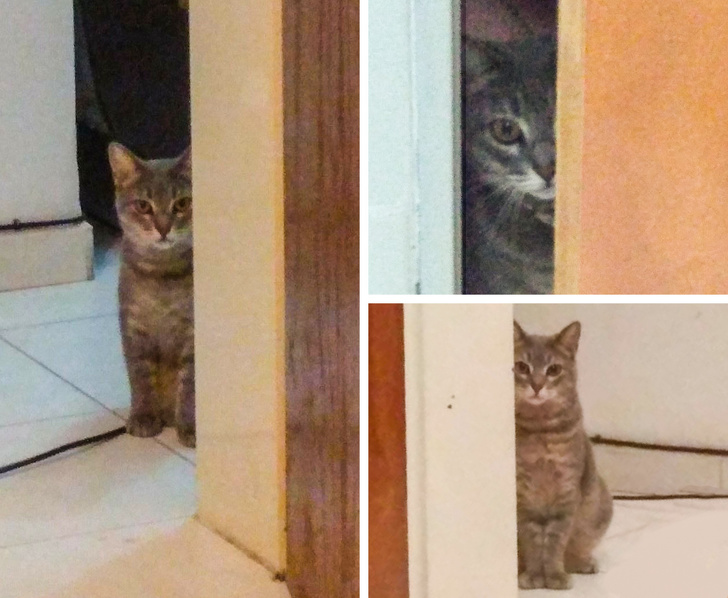 Коты, чьи безумные проделки доказывают, что смекалки у них не занимать (ФОТО)