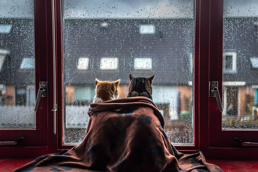 Коты и дождь (ФОТО)
