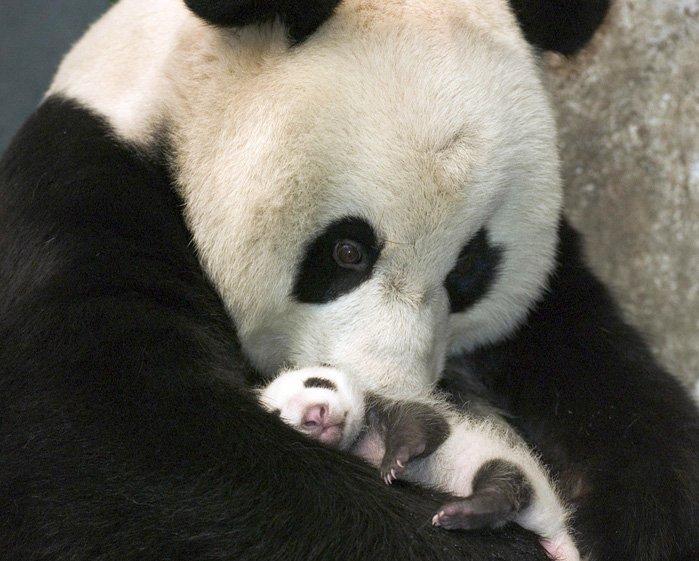 Милые детёныши животных, которые заряжают позитивом (ФОТО)