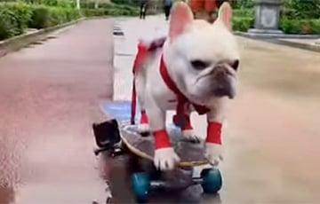 Смелый бульдог освоил катание на скейтборде (ВИДЕО)